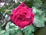 Schwarze_madonna_100525_3