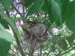 Birds_nest_100526_3