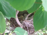 Birds_nest_100603_2