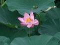 Lotus_2_2010
